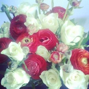 ranonkels, lente bloemen